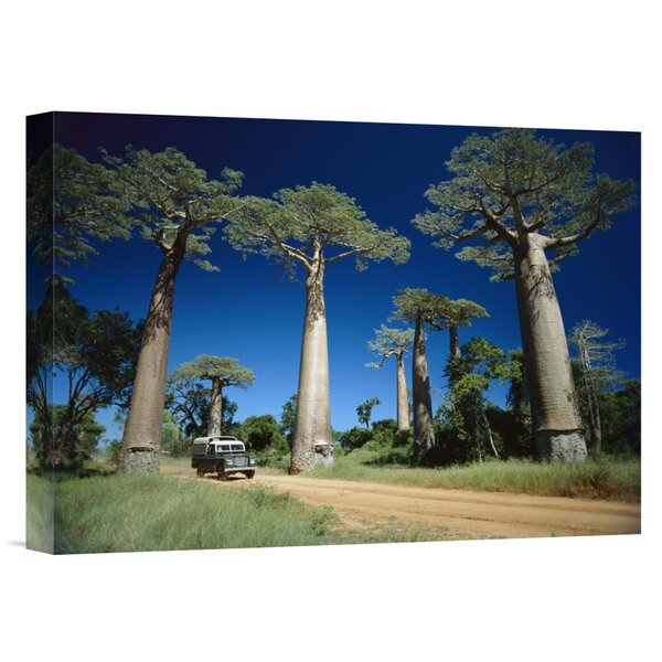 East Urban Home Madagascar Grandidier S Baobab Trees Beside Road Photographic Print On Wrapped Canvas Wayfair