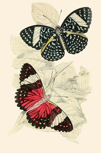 Buyenlarge European Butterflies And Moths Print Wayfair