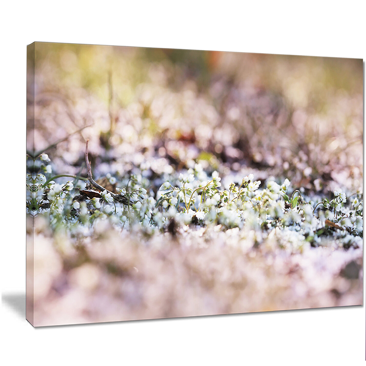 Designart Little White And Pink Flowers Photographic Print On Wrapped Canvas Wayfair
