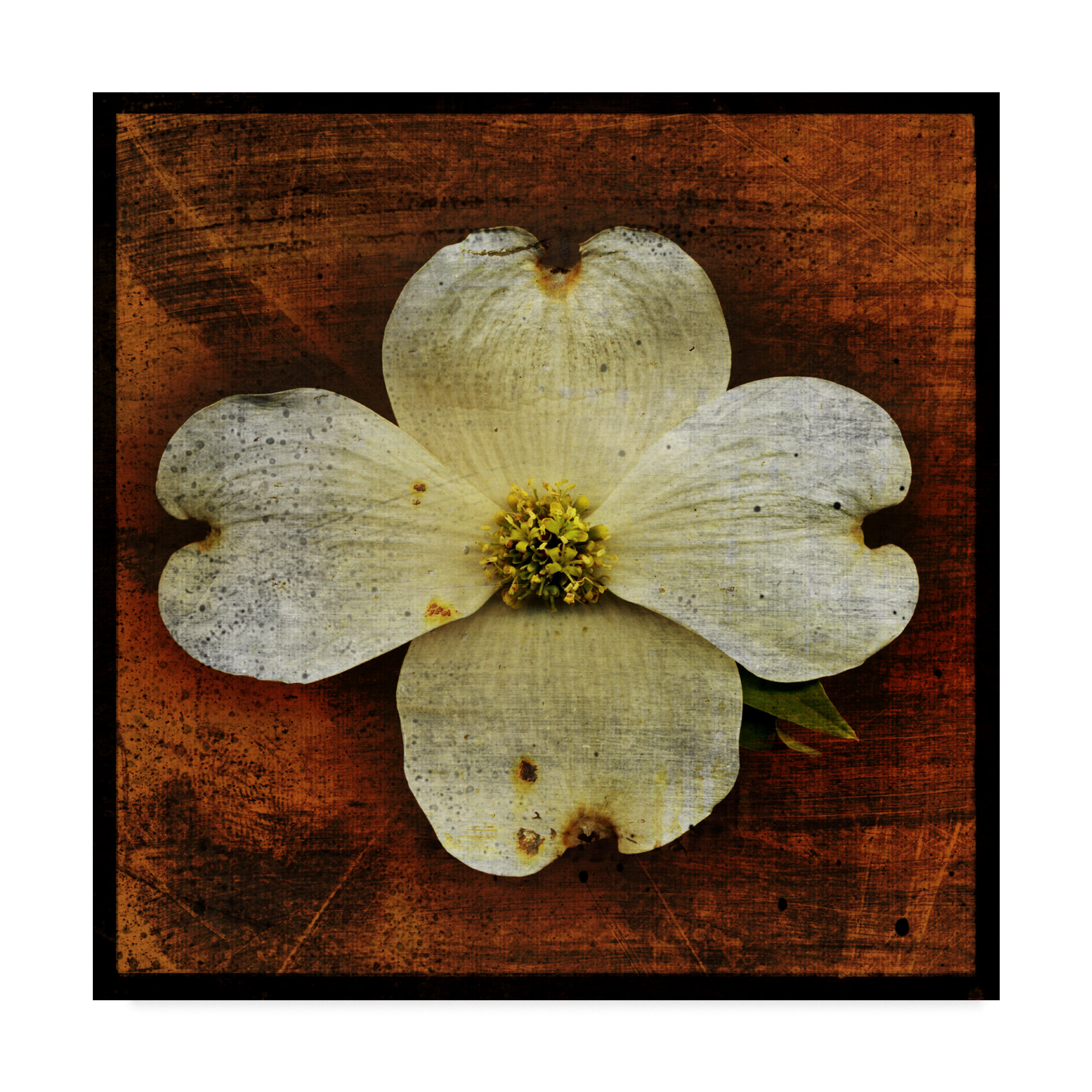 Trademark Art White Dogwood Graphic Art Print On Wrapped Canvas