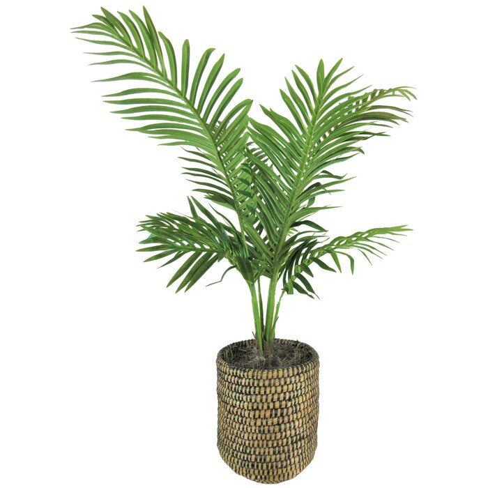 Palm Plant in Basket on herb plants for home, vine plants for home, potted plants for home, tropical plants for home, water plants for home, decorative plants for home, indoor plants for home,