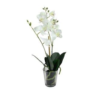 Potted Phalaenopsis Artificial Silk Orchids Floral Arrangement in Vase