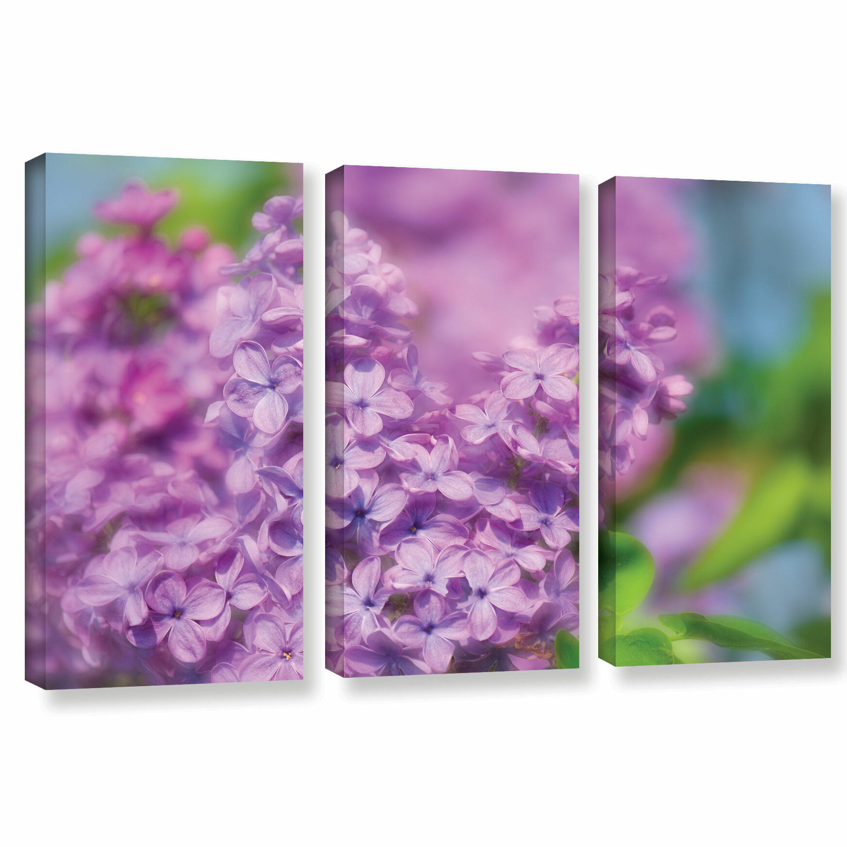 August Grove Lilac I 3 Piece Photographic Print On Wrapped Canvas Set Wayfair