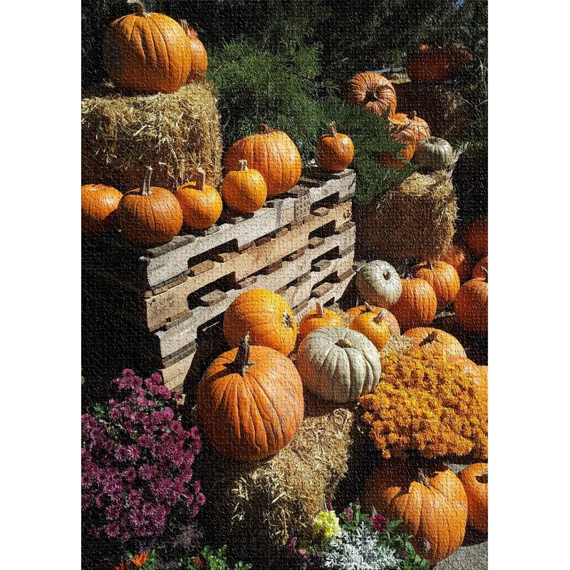 East Urban Home Pumpkin Cotton Orange Area Rug