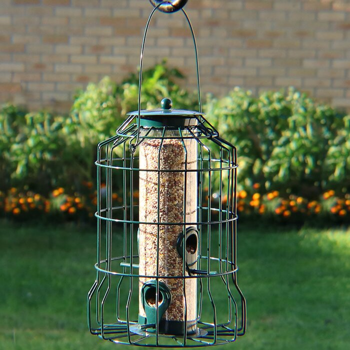 4-Peg Squirrel-Proof Wild Tube Bird Feeder