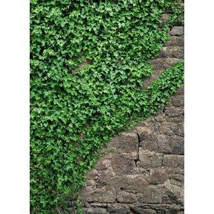 Komar Wall Mural Wayfair