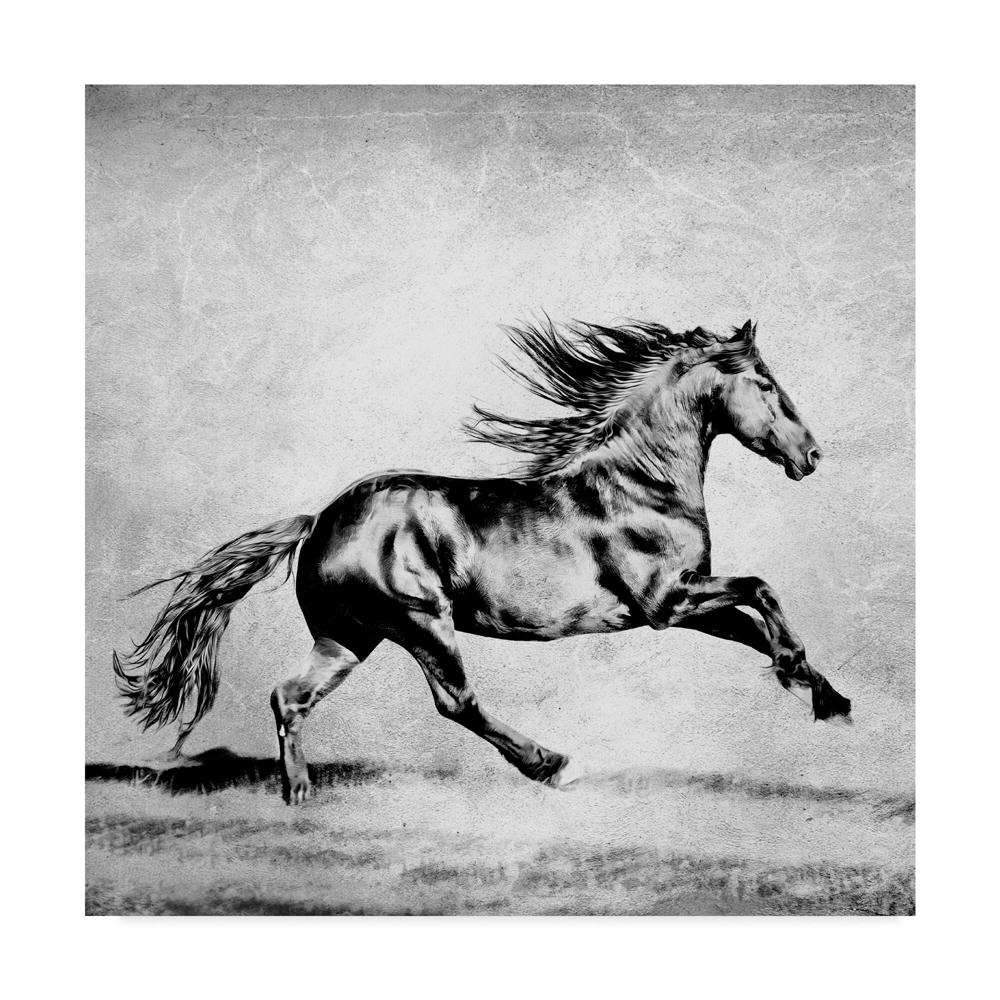 East Urban Home Black And White Horses Ii Graphic Art Print On Wrapped Canvas