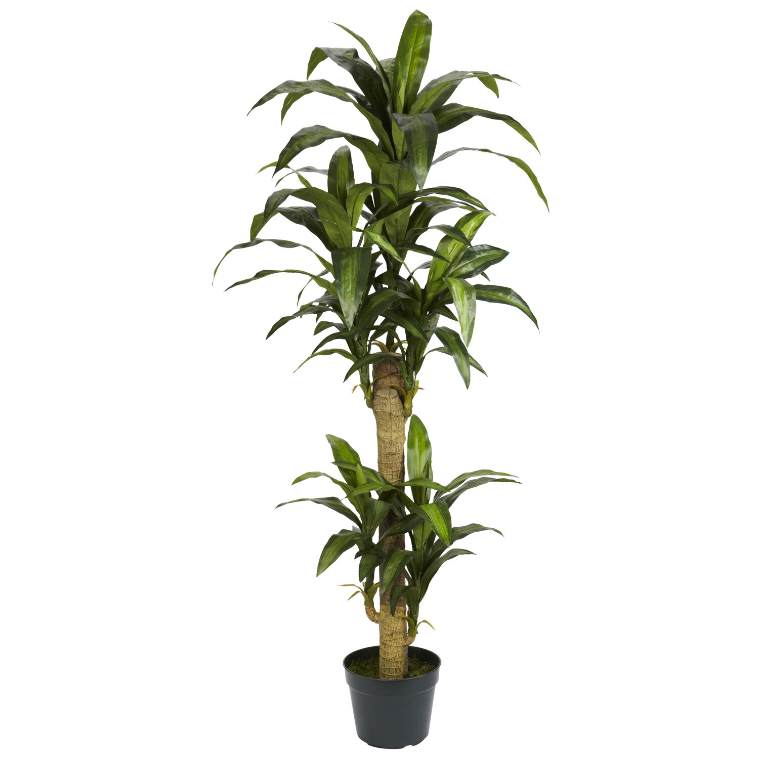 Beachcrest Home 53 Artificial Yucca Plant In Planter Reviews Wayfair