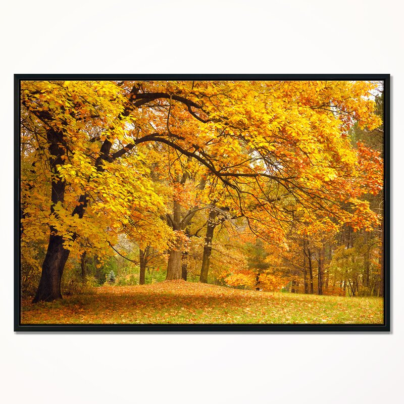 East Urban Home Golden Autumn Forest Framed Photographic Print On Wrapped Canvas Wayfair