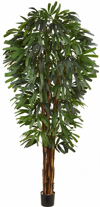 entracing palm tree type house plant. Raphis Silk Palm Tree in Pot Nearly Natural  Reviews Wayfair