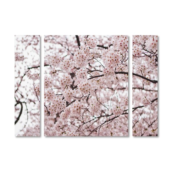 Trademark Art Cherry Blossoms By Ariane Moshayedi 3 Piece Photographic Print On Wrapped Canvas Set Reviews Wayfair