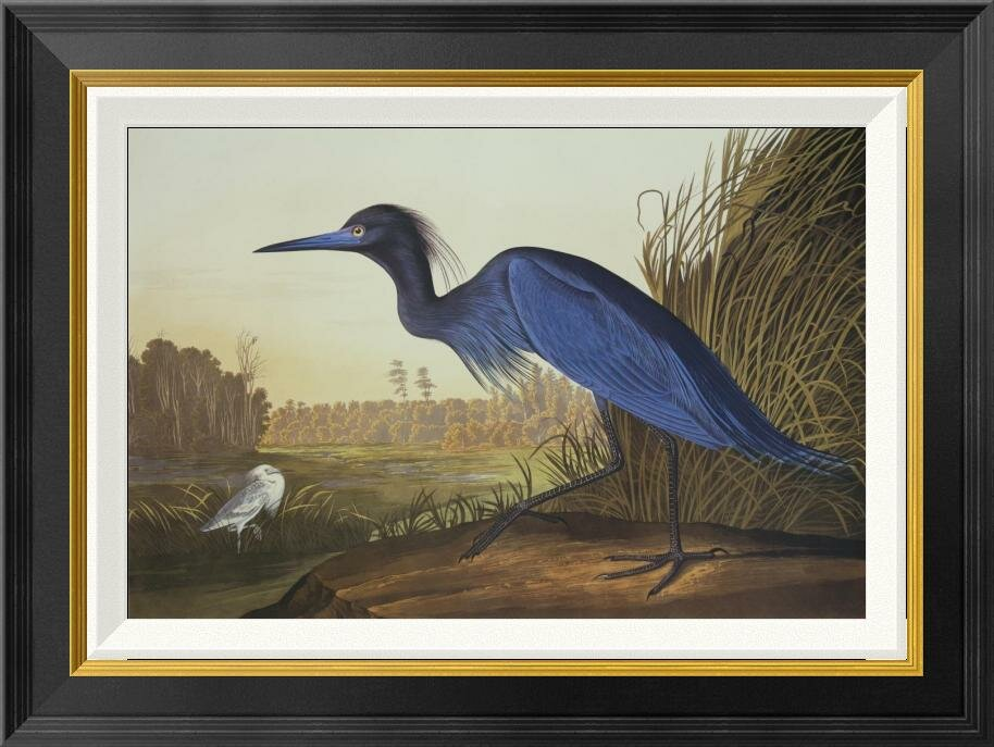'Blue Crane or Heron' by John James Audubon Framed Wall Art - Shop Drew's Honeymoon House {Guest Bedrooms} #bluecrane #audubon #birdprint