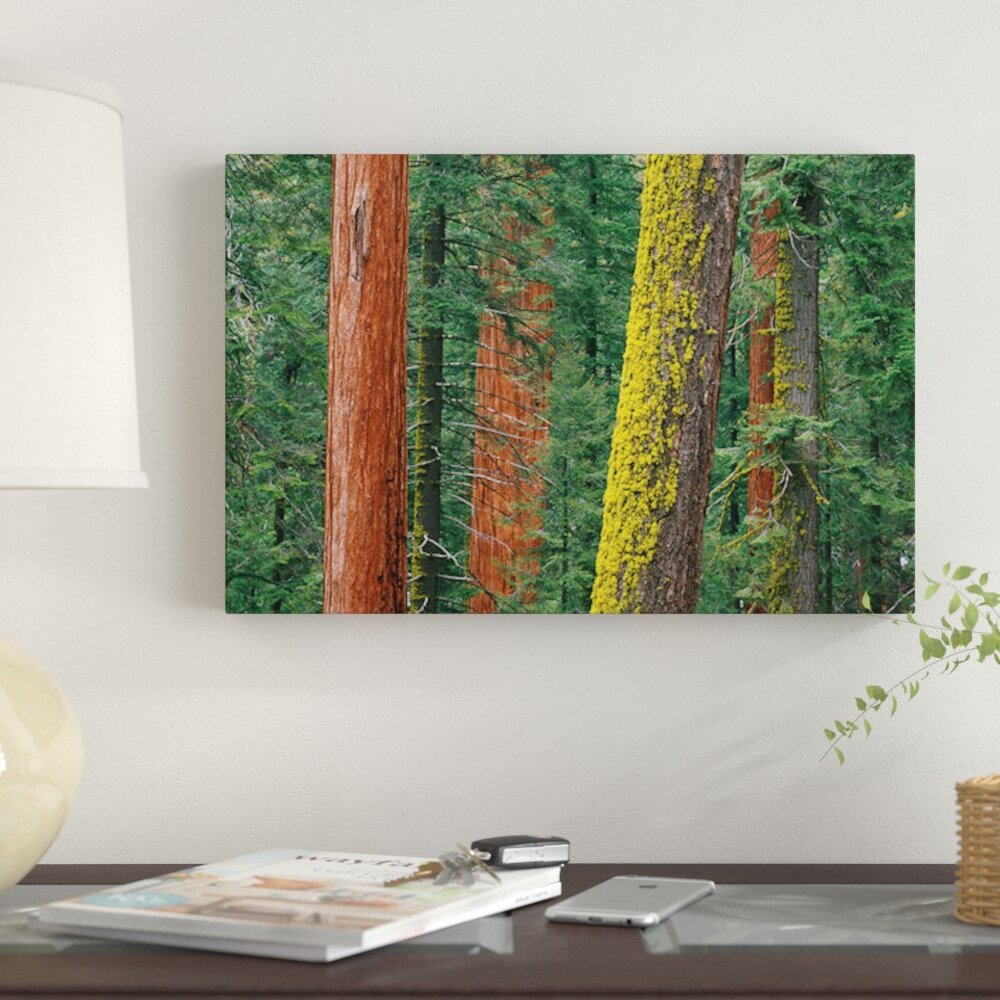 East Urban Home Giant Sequoia Trees Grant Grove Sequoia National Park California Graphic Art Print On Canvas Wayfair