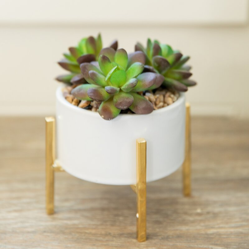 Ebern Designs Mix Stand Desktop Succulent Plant In Pot Reviews Wayfair