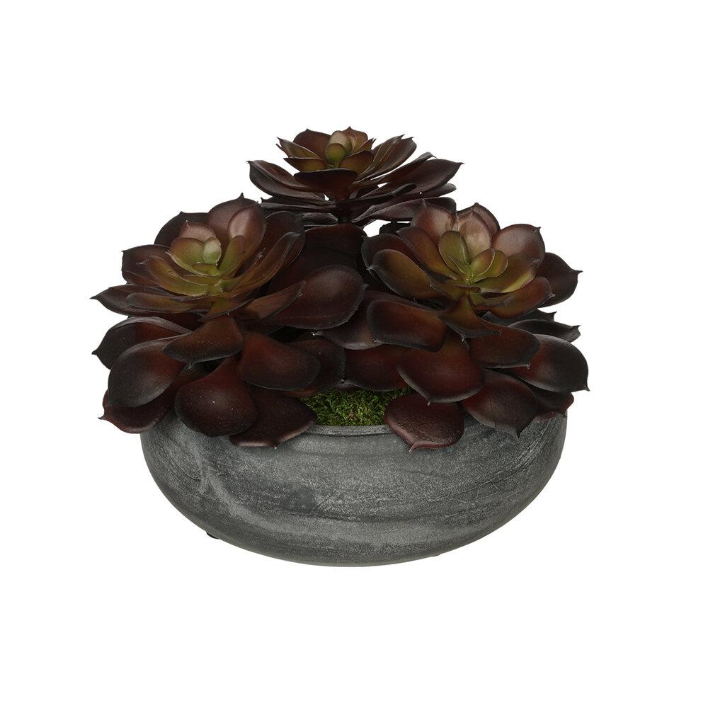 House Of Silk Flowers Artificial Echeveria Plant In Ceramic Bowl