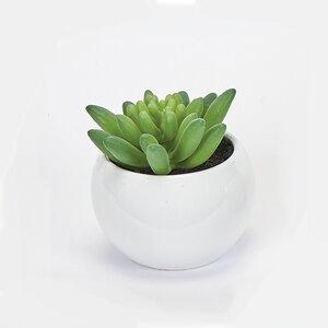 Desktop Succulent Plant in Ceramic Pot (Set of 2)