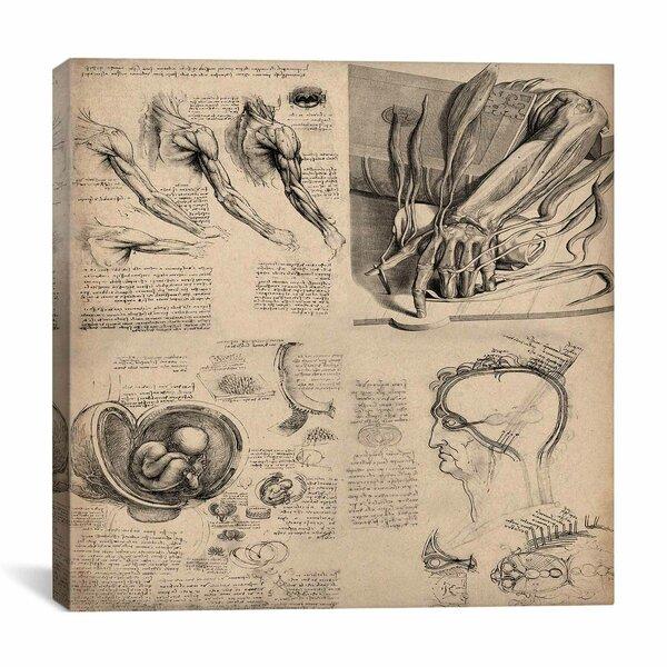 Human Anatomy Art Wayfair