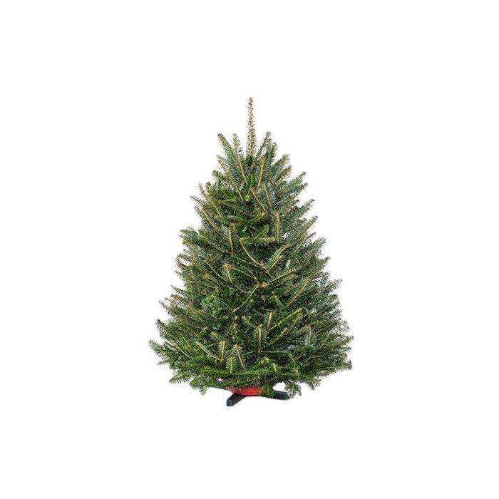 Fresh Christmas Trees Near Me.Pre Order Fresh Fraser Fir Christmas Tree