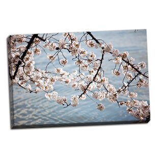 'Cherry Blossoms II' Photographic Print on Wrapped Canvas