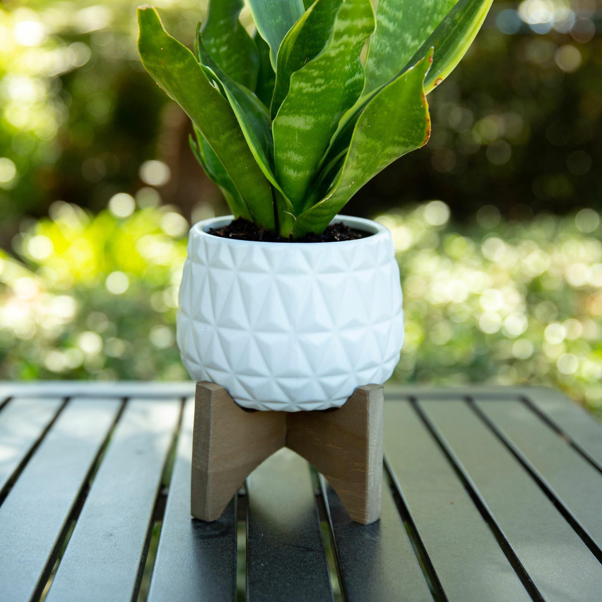 Bungalow Rose Kaleid Ceramic Pot Planter Reviews Wayfair
