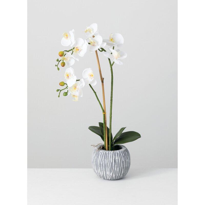 floral home decor orchid floral design wayfair.htm everly quinn orchids floral arrangements and centerpieces wayfair  everly quinn orchids floral
