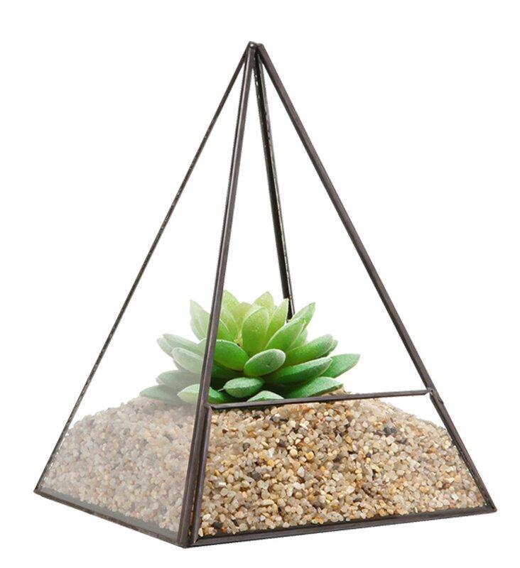 Nott Tabletop Succulent Glass Terrarium Reviews Joss Main