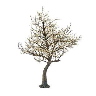 Jeanne Willow Tree 120