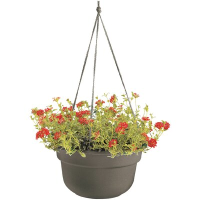 Leadore Self-Watering Vinyl Hanging Planter August Grove Size: 6 H x 10.38 W x 10.38 D, Color: Peppercorn