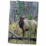 3D Rose Rocky Mountain Bull Elk Reflecting Hand Towel 15 x 22