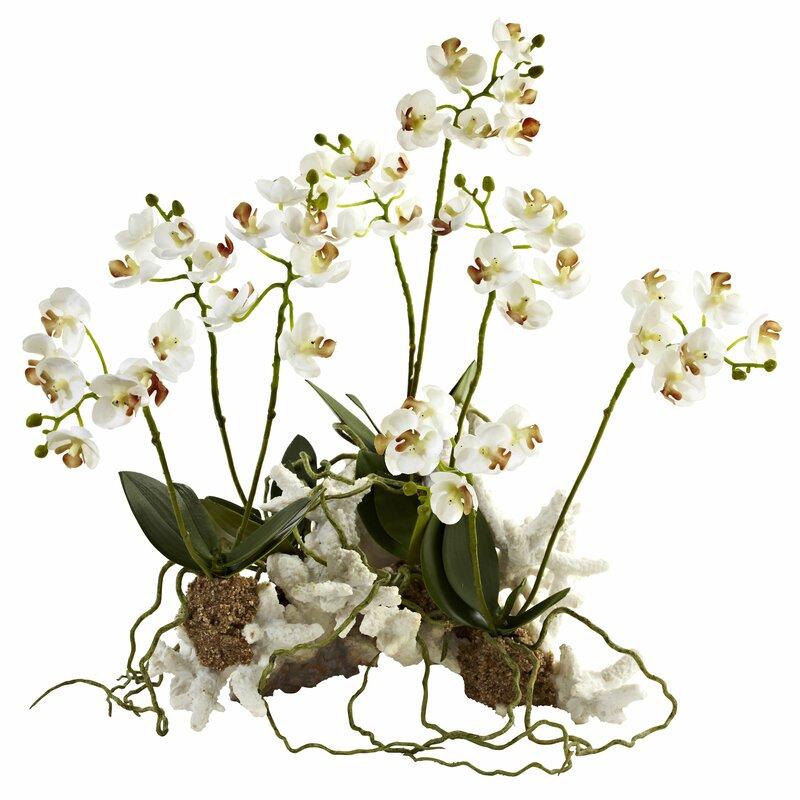 floral home decor orchid floral design wayfair.htm charlton home mini phalaenopsis orchids floral arrangement  charlton home mini phalaenopsis orchids