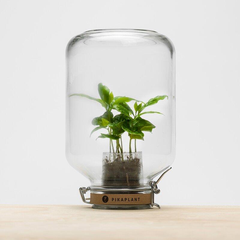 Hokku Designs Terrarium-Topf mit Bewässerungssystem | Wayfair.de