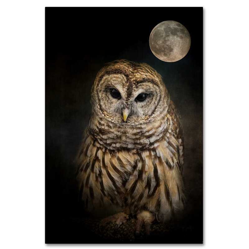 Trademark Art Barred Owl And The Moon Graphic Art Print On Wrapped Canvas Reviews Wayfair