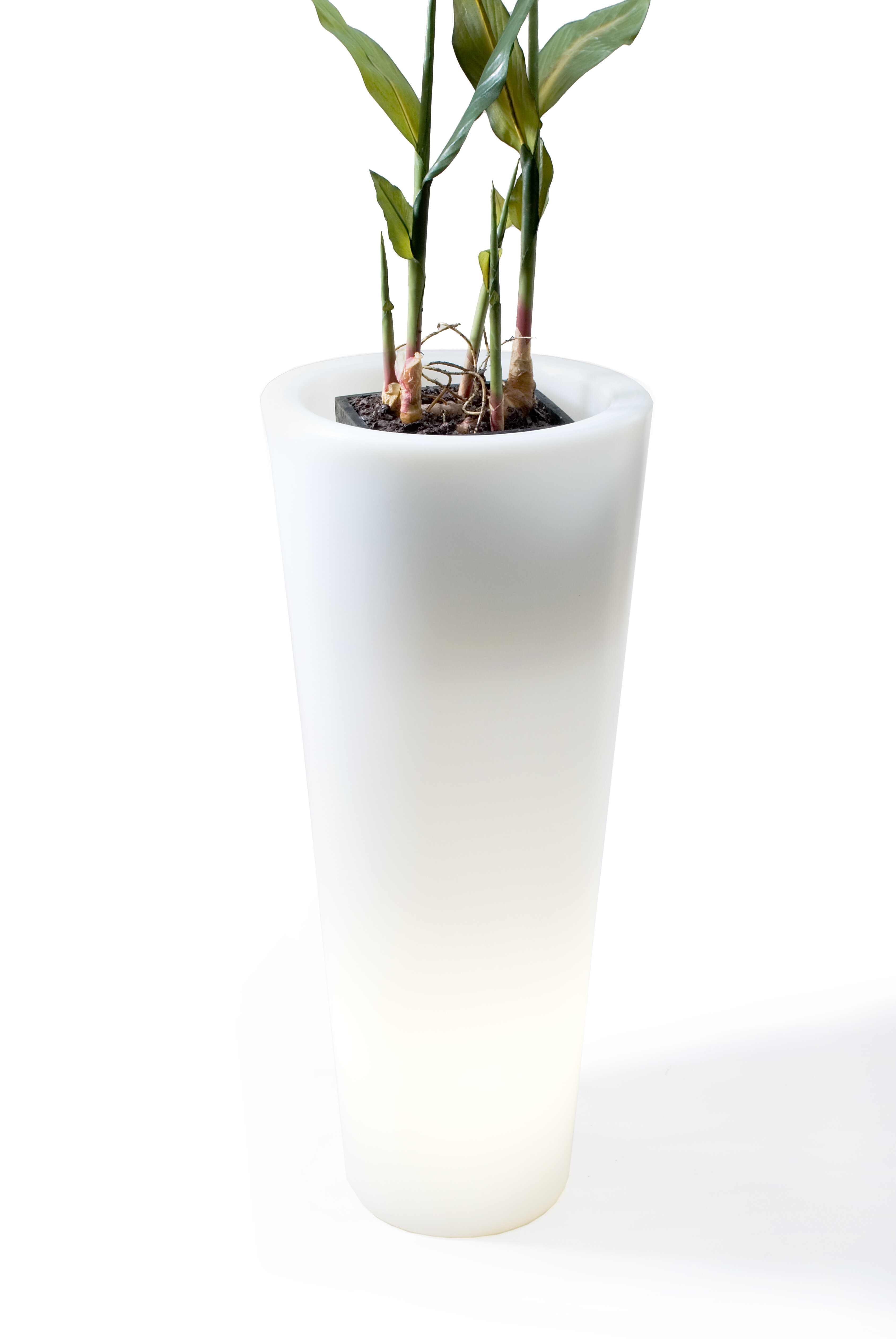 Offi Luminous Pots 1 Piece Plastic Pot Planter Wayfair