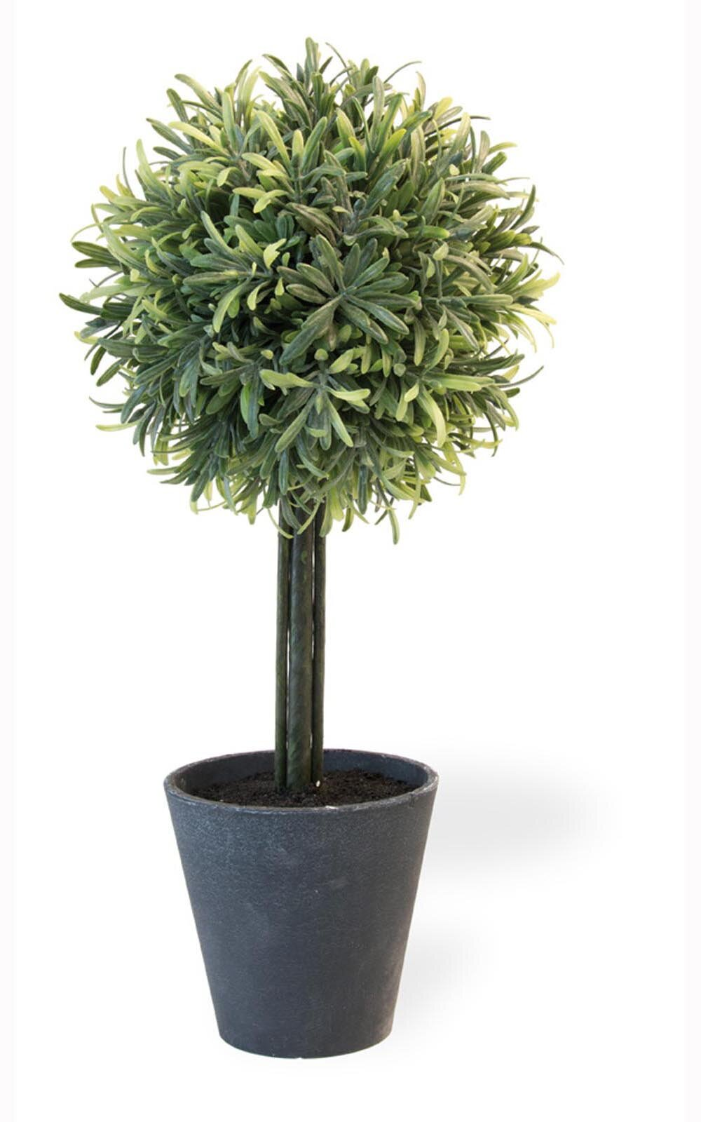 Fleur De Lis Living Rosemary Herbs Topiary In Pot Wayfair