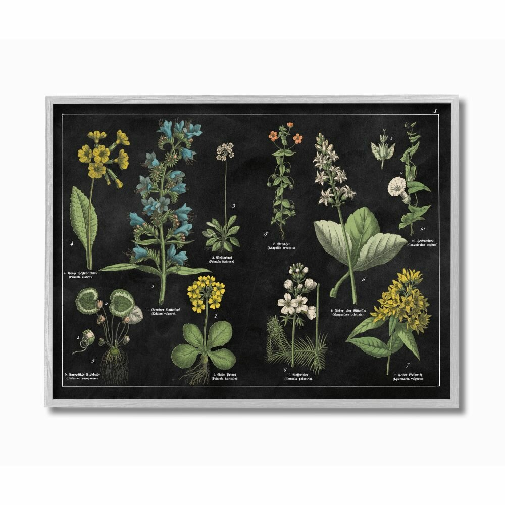 August Grove Antique Wild Flower Chart Scientific Botanical Print By Wild Apple Portfolio Graphic Art Print Wayfair