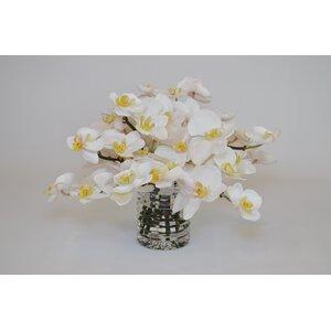 Orchids in Ribbed Cylinder Vase