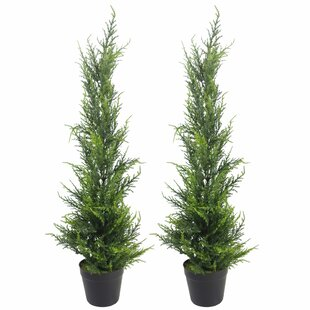 2 Piece Cedar Floor Topiary In Planter (Set Of 2) By The Seasonal Aisle