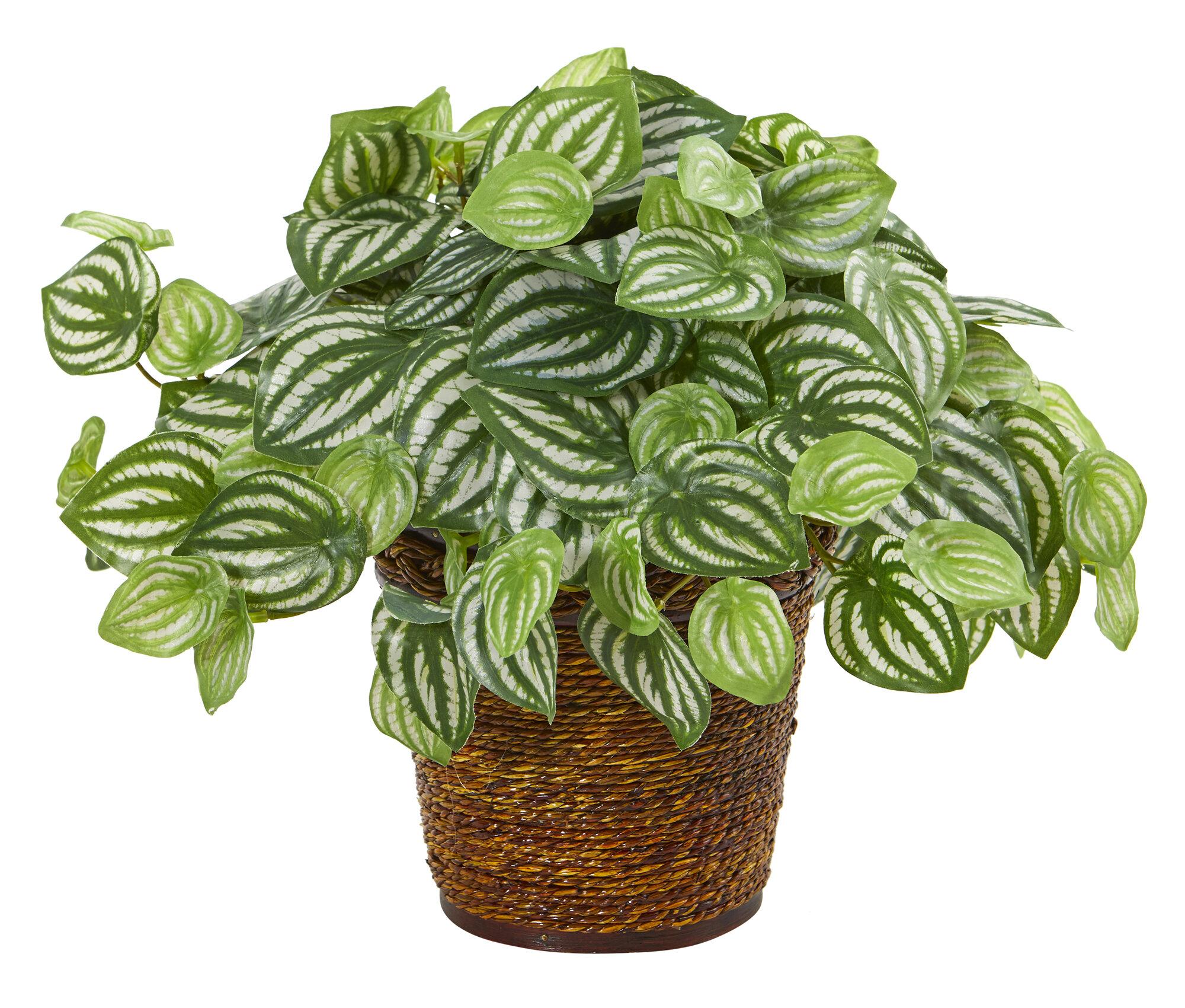 Gracie Oaks Artificial Peperomia Plant In Basket Wayfair