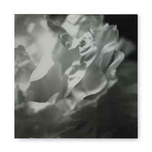 Black and white flower art wayfair kelly hoppen black and white flower h graphic art print mightylinksfo