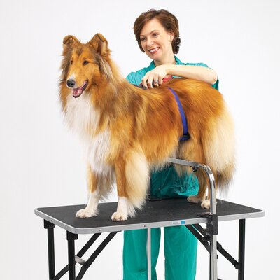 Dog Grooming Tables Amp Bath Tubs You Ll Love In 2020 Wayfair