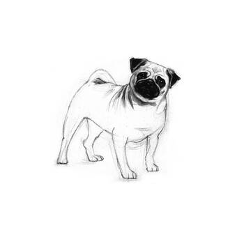 JBass Grand Gallery Collection 'Baby Pug' Framed Graphic Art