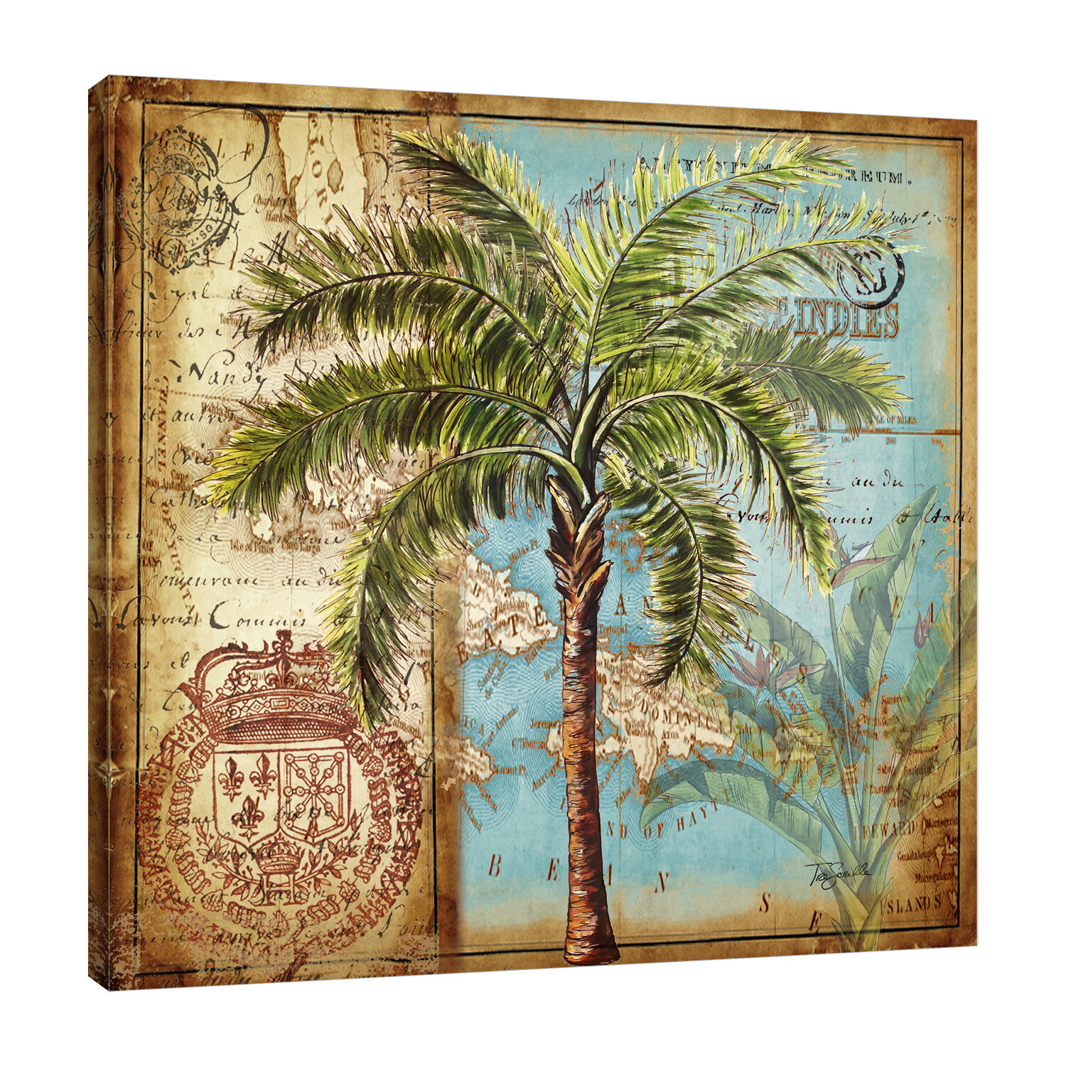 Bay Isle Home Antique Palm Tree Iii Graphic Art Print On Wrapped Canvas Reviews Wayfair
