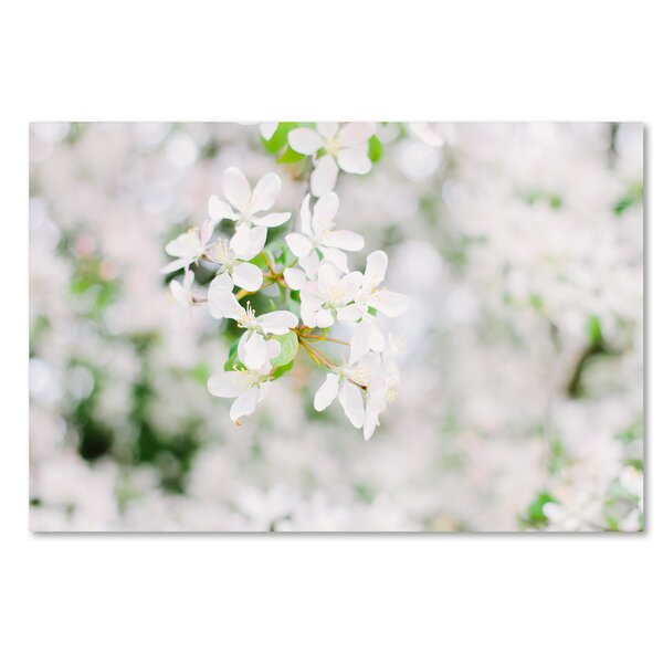 Trademark Art White Cherry Blossoms 3 By Ariane Moshayedi Photographic Print On Wrapped Canvas Wayfair