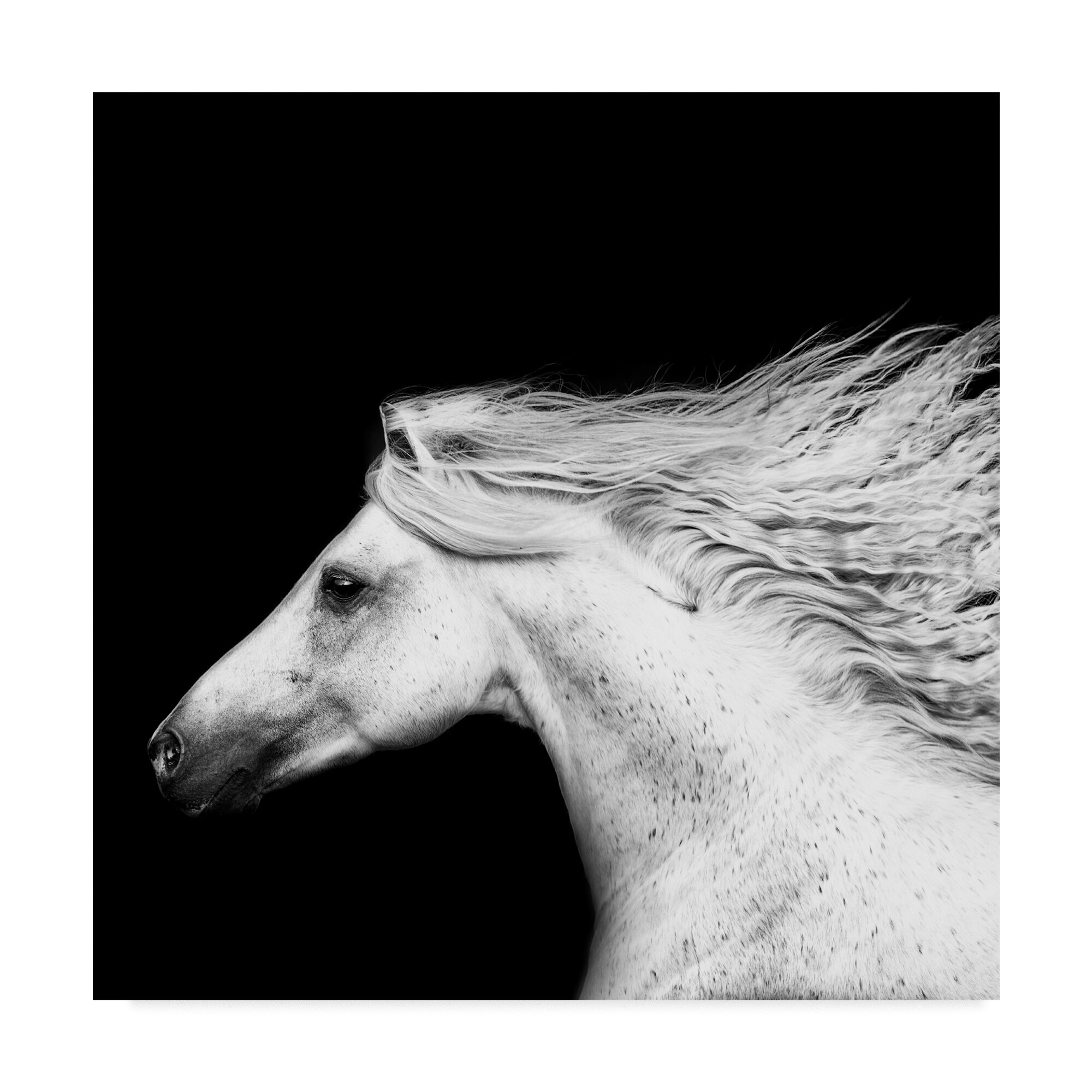 East Urban Home Black And White Horses V Photographic Print On Wrapped Canvas
