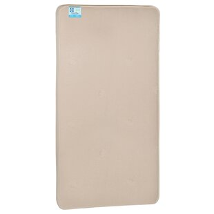 Sealy Cotton Bliss 2 Stage 5.75 Mattress by Sealy