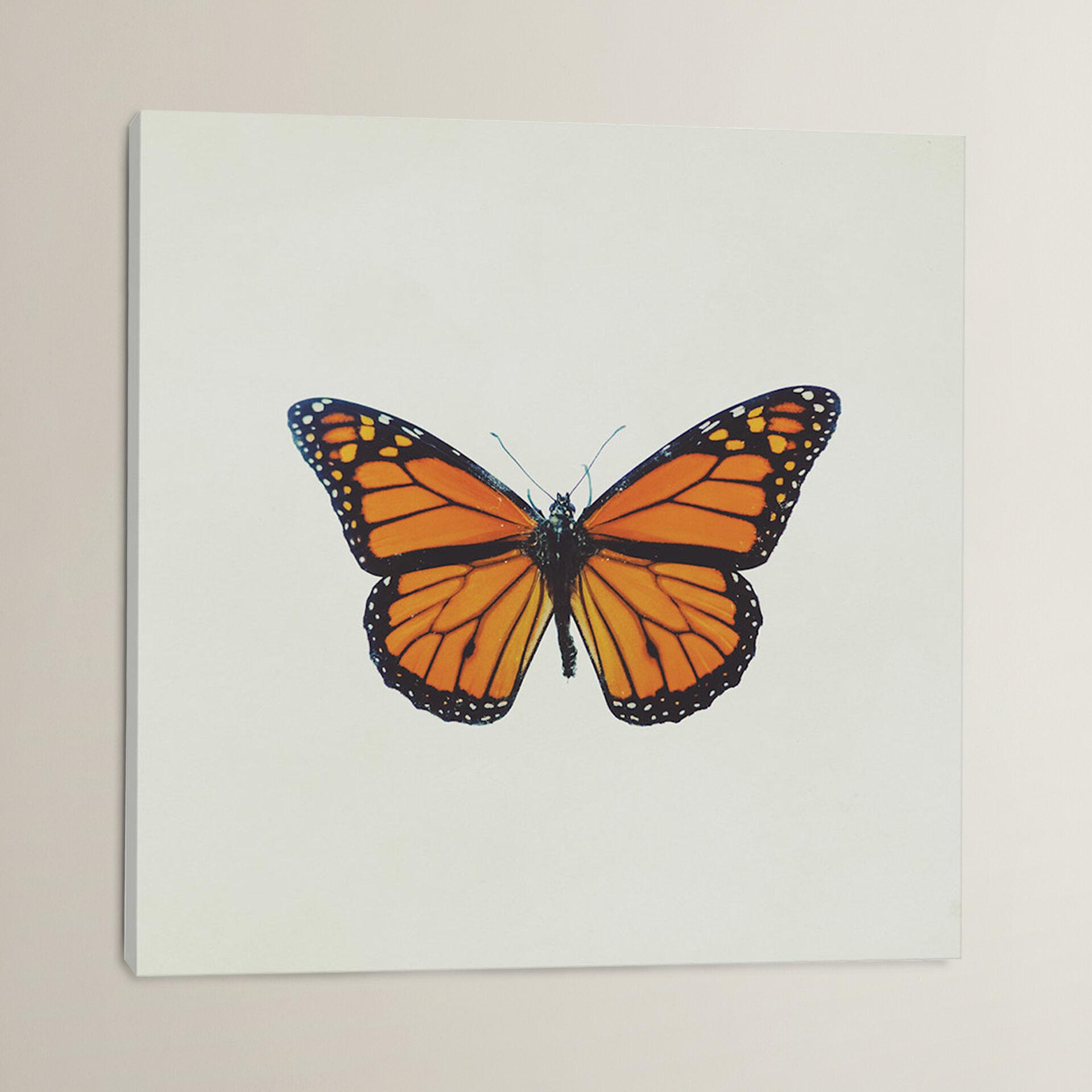 Alcott Hill Butterfly Photographic Print On Canvas Wayfair