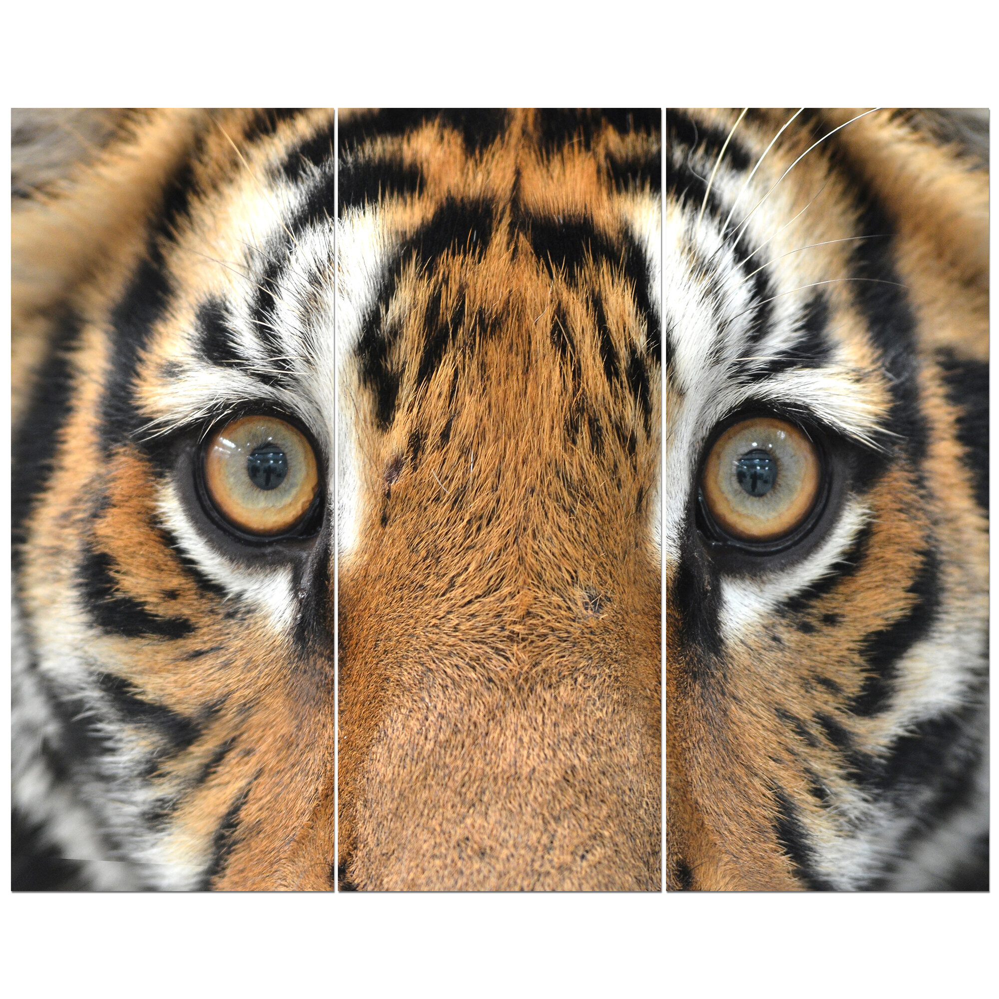 East Urban Home Bengal Tiger Eyes Photographic Print Multi Piece Image On Wrapped Canvas Wayfair