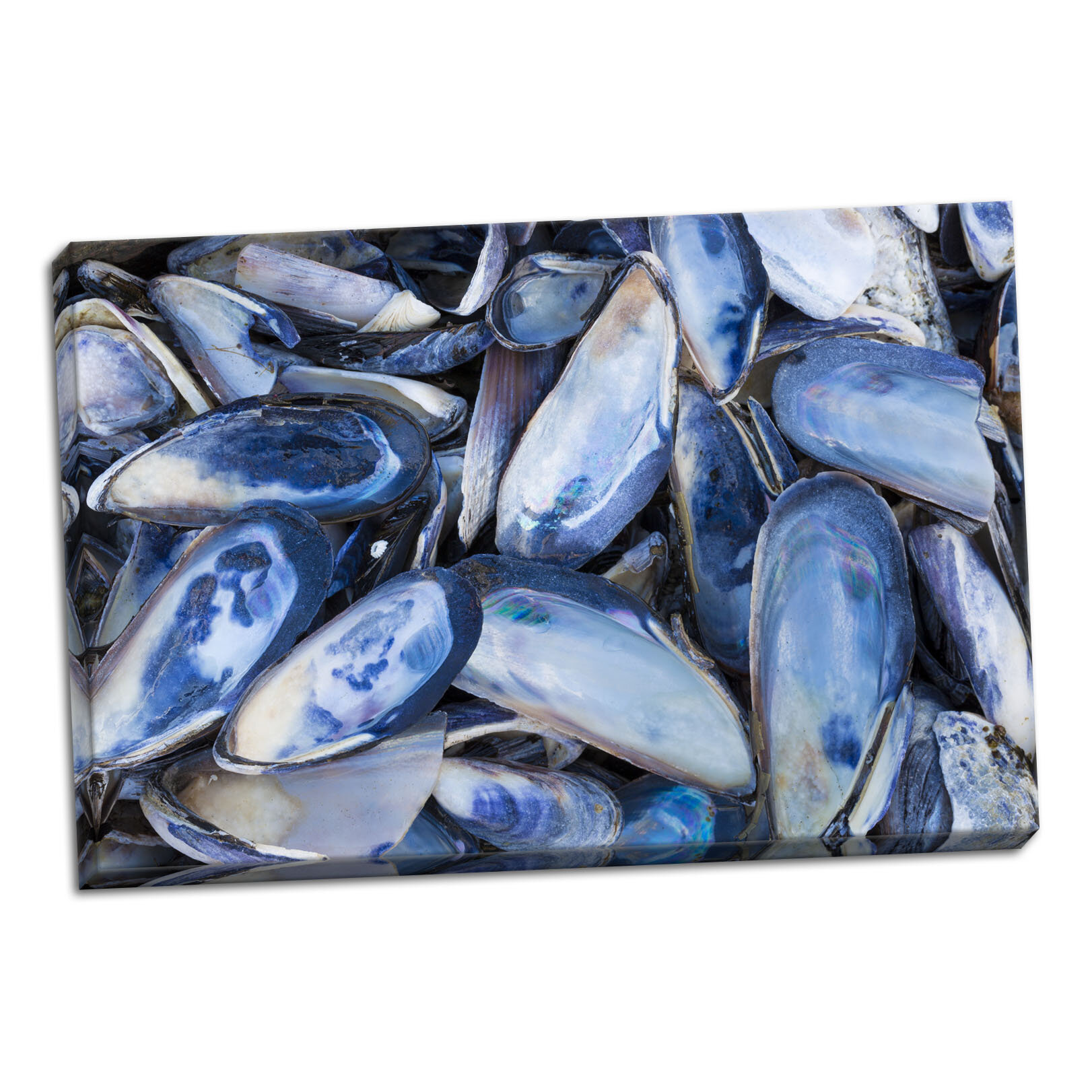Breakwater Bay Mussels I Photographic Print On Wrapped Canvas Wayfair