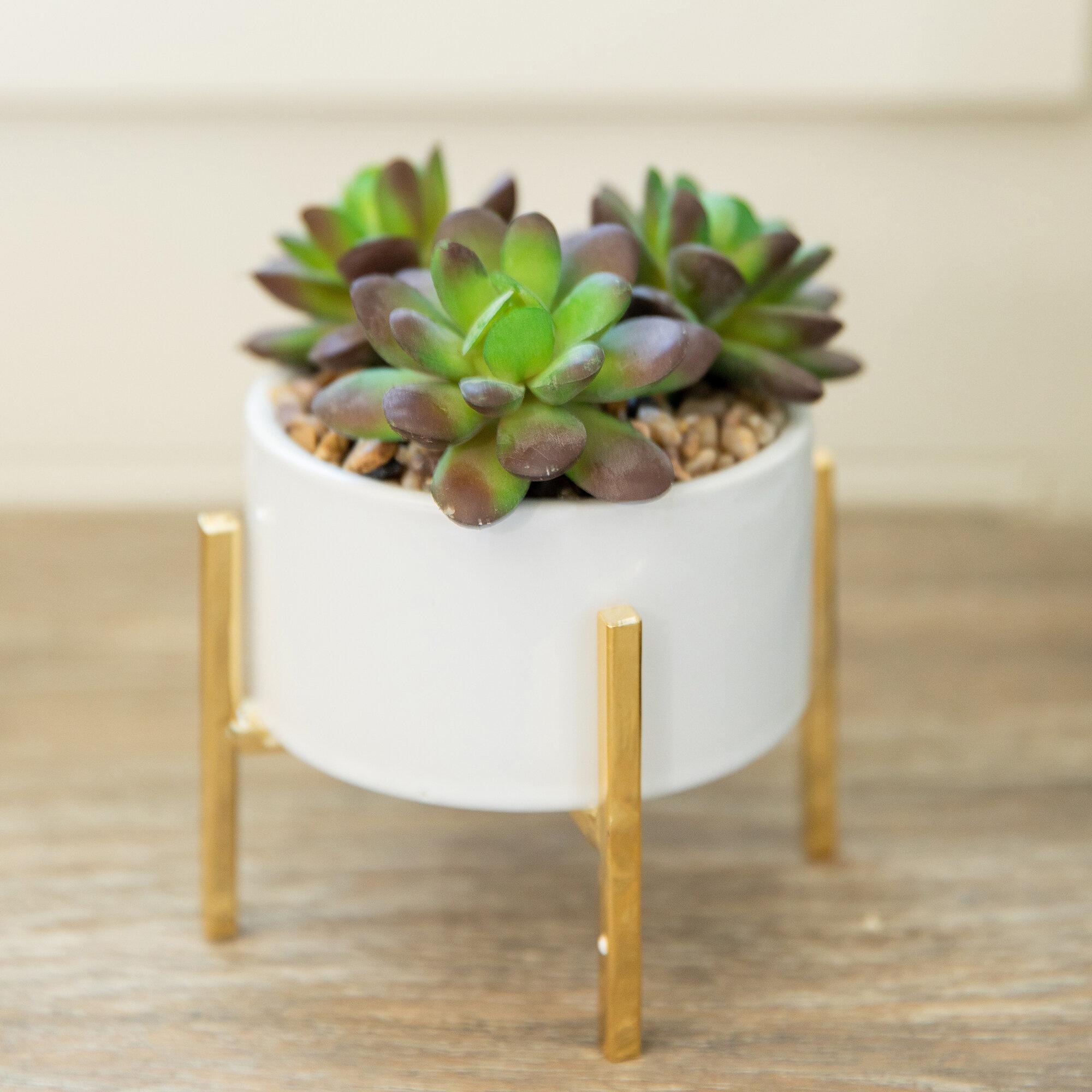 Ebern Designs Mix Stand Desktop Succulent Plant In Pot Reviews Wayfair