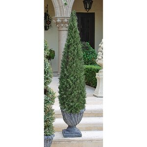 The Cone Topiary in Urn
